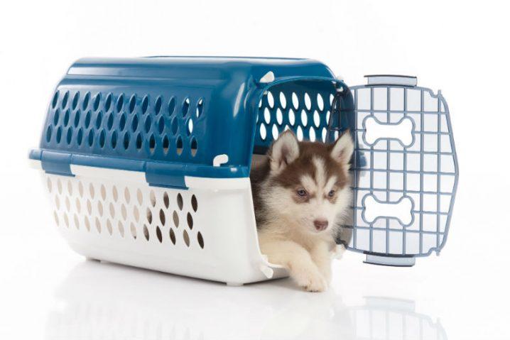 Saiba quais são os valores cobrados pelas companhias aéreas para transportar o seu pet