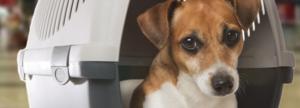 Confira os documentos que você precisa para não ter problemas na hora de embarcar com seu pet