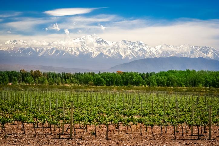 4 passeios imperdíveis em Mendoza com a Brasileiros em Ushuaia