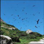 Festival de Aves promete agitar o final de semana em Ilhabela (SP)